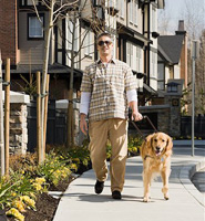 Man walking with a guide dog.